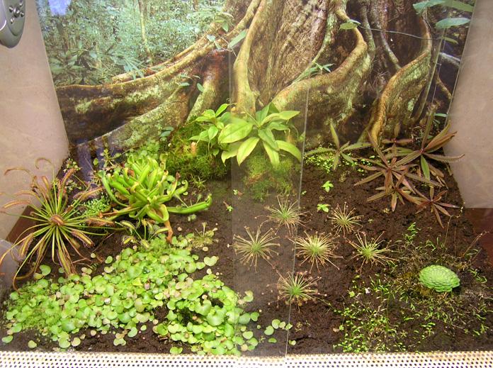 plante carnivore dendrobate